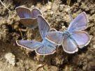 Lilian Fly